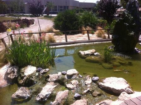 שדרוג בריכת דגים וצמחי מים