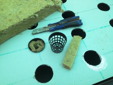 הכנת הסלסילה עם מצע צמר סלעים