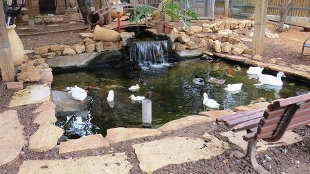 בריכת דגים ועופות בית חולים גהה