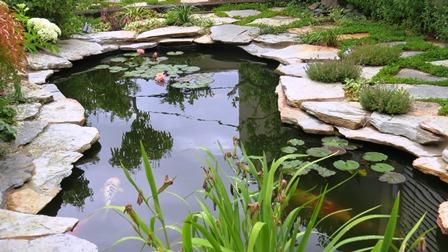 הכנסת צמחי נימפאה וצמחי גדה