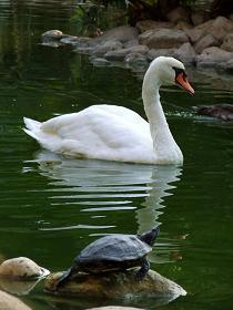 שדרוג מערכת פילטרים לבריכת עופות מים