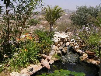 בריכת נוי קטנה בשילת Backyard Fish Pond