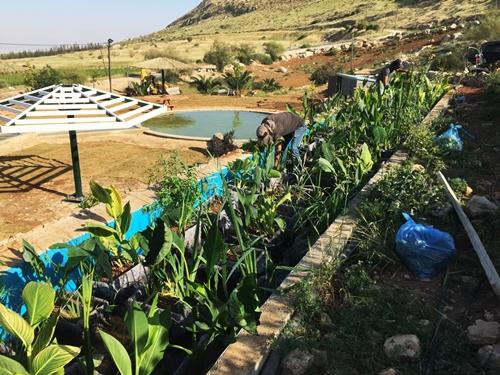 הכנסת צמחי הגדה מים למבנה הפילטר