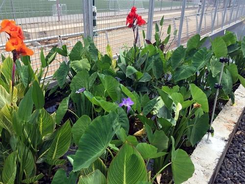 כך נראים הצמחים לאחר שבועיים עבודה של הפילטר