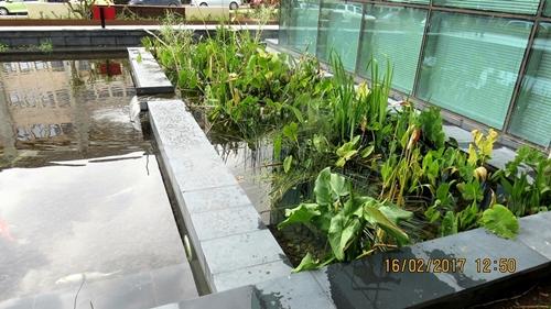 מילוי מים והכנסת הצמחים למבנה הפילטר