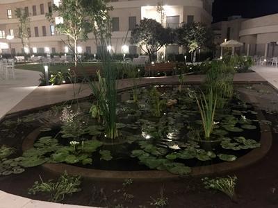 צילום לילה