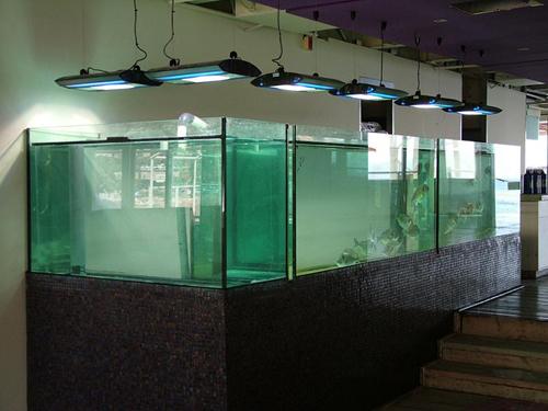 אקווריום דגים במסעדה