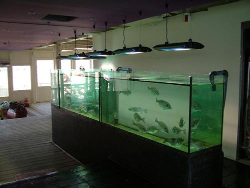 אקווריום דגים למאכל במסעדה
