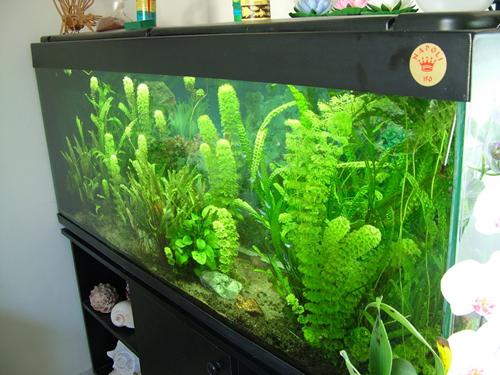 אקווריום צמחיה380ליטר