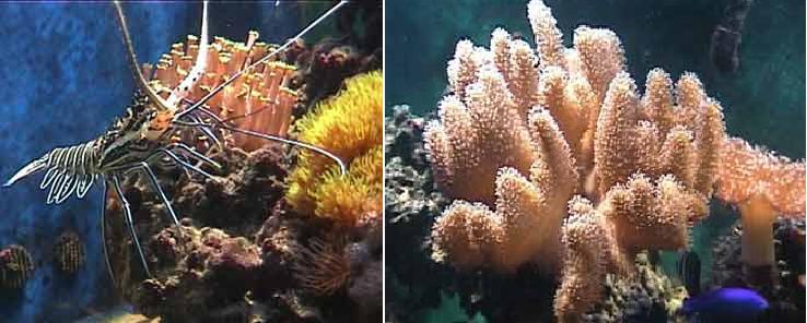 אקווריום מי ים 1280 ליטר