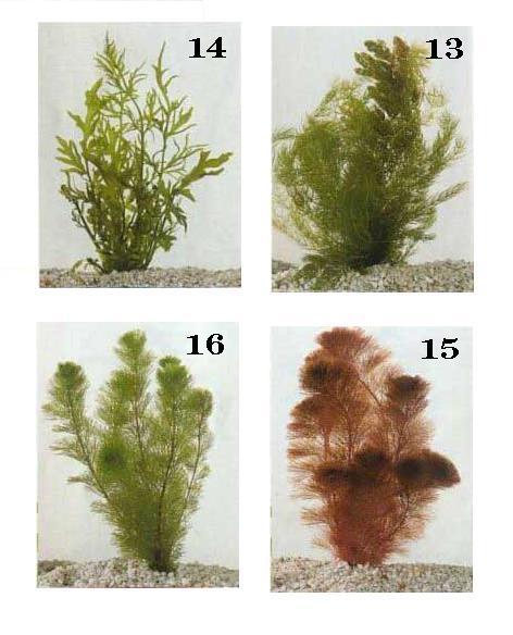 צמחי מים 4