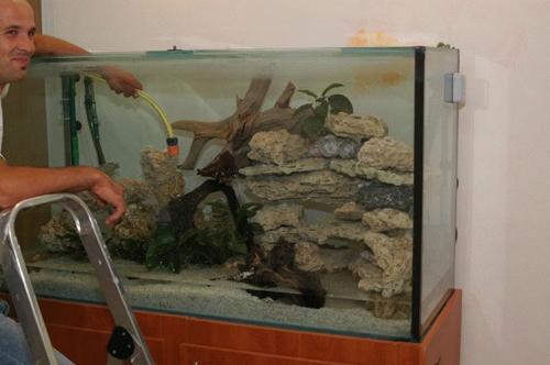 עיצוב אקווריום למשפחת דגי הציקליד