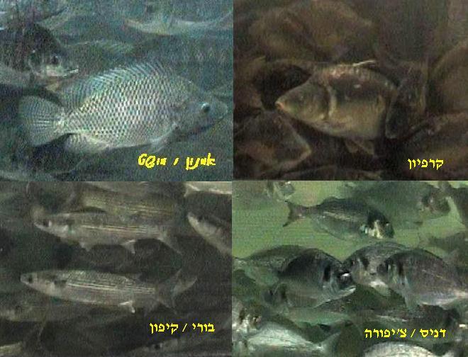 דגים שונים