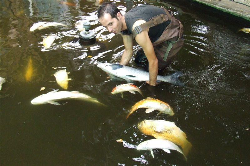 מראה הדגים המתים בבוקר שהגענו לחווה