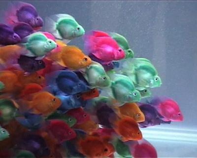 דגי תוכי בתערוכה בסינגפור