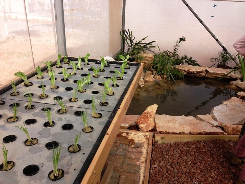 שתילת הצמחים ותחילת הפעילות