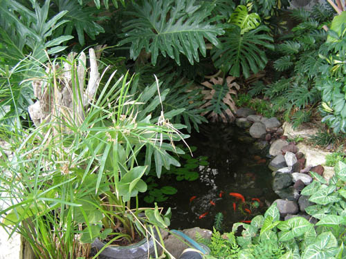 בריכת דגים אקולוגית במודיעין