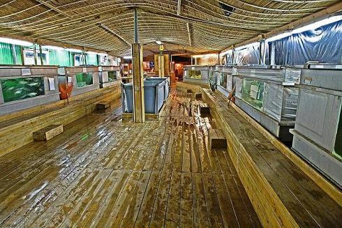 מחלקת דגי המאכל החיים באקווה גן