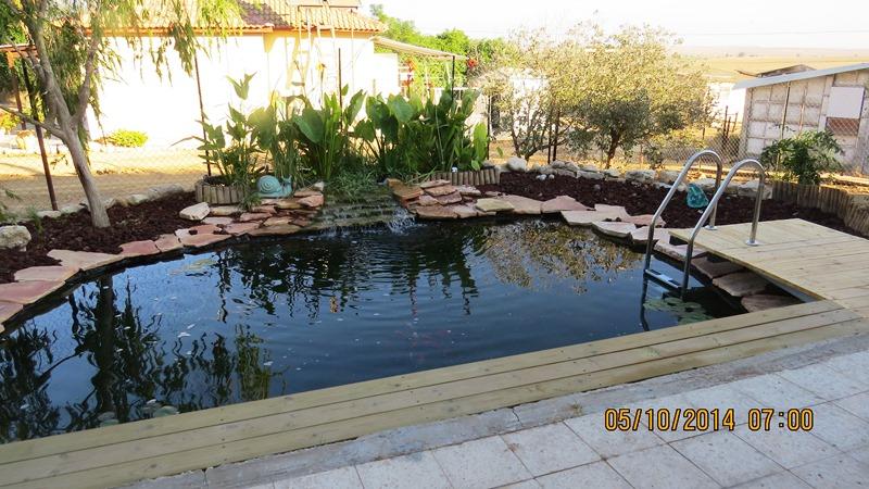 בריכת שחייה אקולוגית במראה הטבעי בישוב תאשור