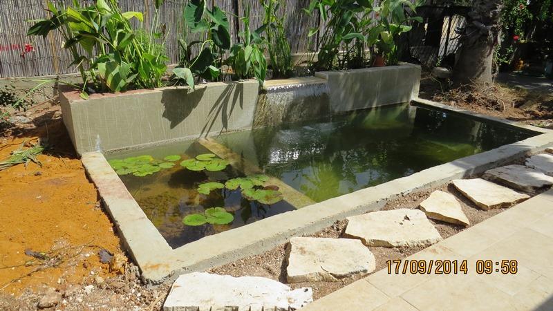 בריכת שחייה אקולוגית במראה הטבעי בישוב שוהם