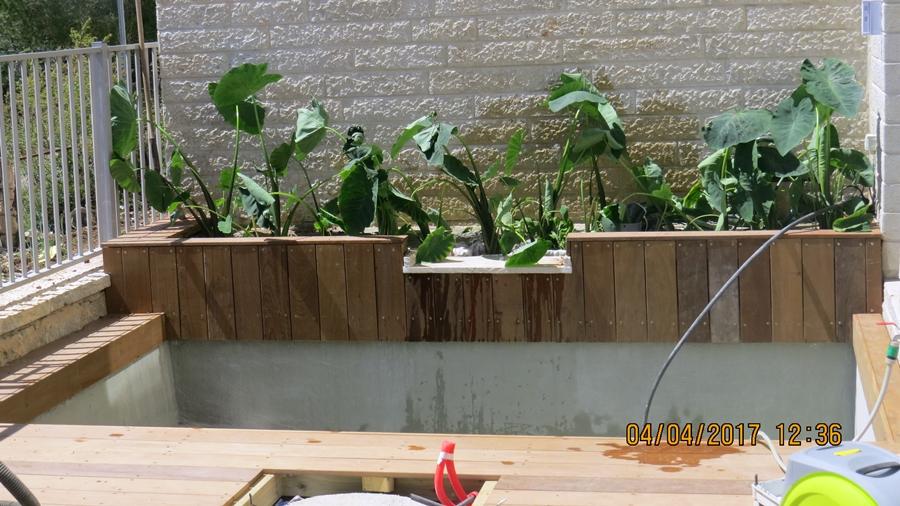 הכנסת צמחים באזור הפילטר