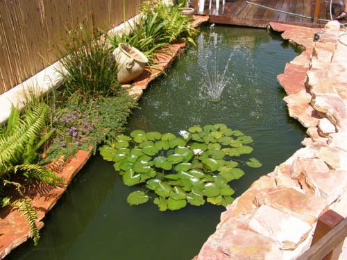 בריכת דגי נוי וצמחי מים בבית שמש
