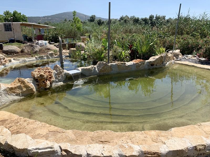בריכת שחייה אקולוגית במראה הטבעי בישוב מרחביה