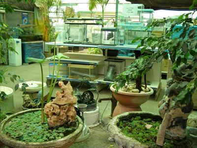 תמונות חוות אקווה גן