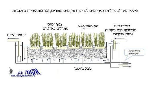 פילטר משולב מצע ביולוגי וצמחי מים Gray water