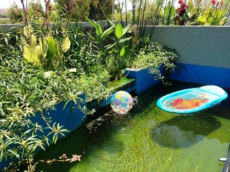 בריכת שחייה אקולוגית ביולוגית  עם דגים