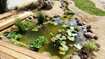 בריכות נוי בסגנון יפני רחובות Backyard Fish Pond