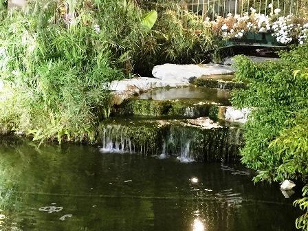 אגם מים קטן בקיבוץ נען לאחר 15 שנה