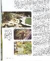 עיתון חי בבית כתבה על בריכות דגים
